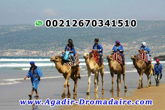Agadir Camel Rides