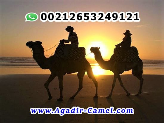 Taghazout, Marrocos: Agadir Camel Riding