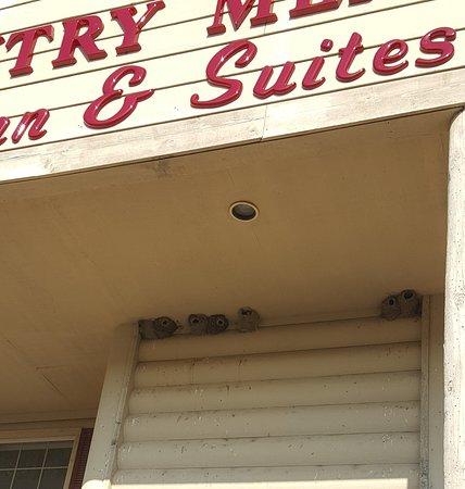 McGregor, Minnesota: barn swallow nests
