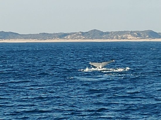 Phillip Island Whale Watching Tour: Whale Tail