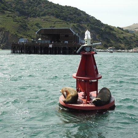 Central Coast Sailing and Avila Beach Whale Watching: photo0.jpg