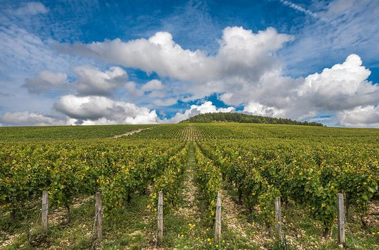 Private Day Tour: Chablis Vine from...