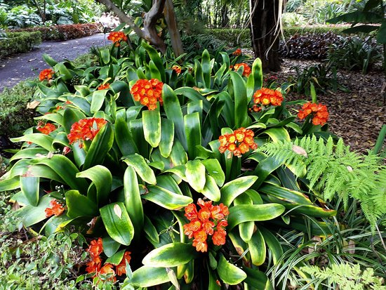 Botanical Gardens (Jardin Botanico)