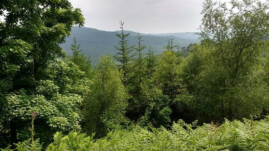 Grizedale Forest: Beautiful view of forest hills