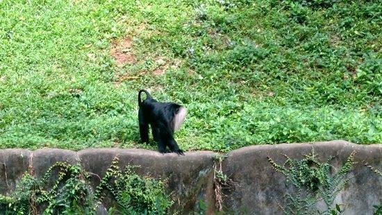 Thiruvananthapuram Zoo ภาพถ่าย