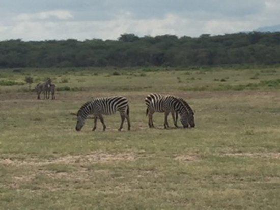 Arusha National Park - Picture of Micato Safaris, Nairobi
