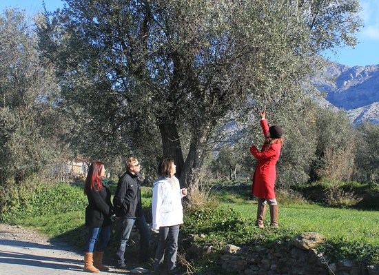 Foodie & Tours Granada : Olive Oil Tree Granada