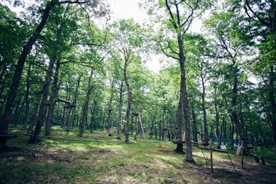 Albano di Lucania, Italy: Il nostro Parco Avventura è un insieme di  percorsi  acrobatici tra gli alberi, passerelle sospe