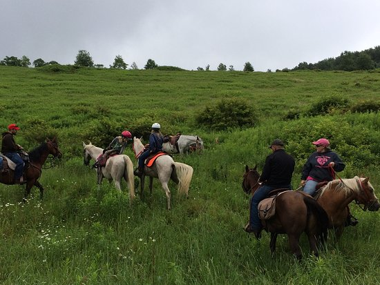 Coudersport, PA: Come and ride in the Susquehannock Forest with us!