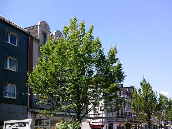Der Zaun Um Das Kirchen Grundstuck Picture Of St Michael
