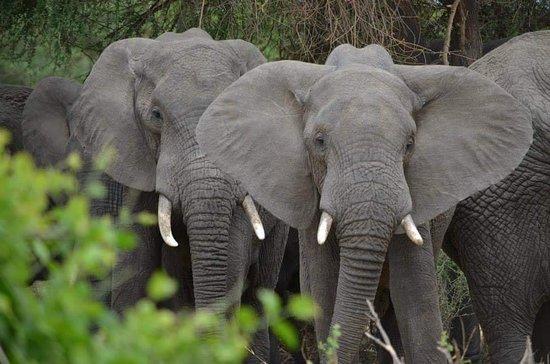 Tarangire National Park, Tanzania: FB_IMG_1528741728169_large.jpg