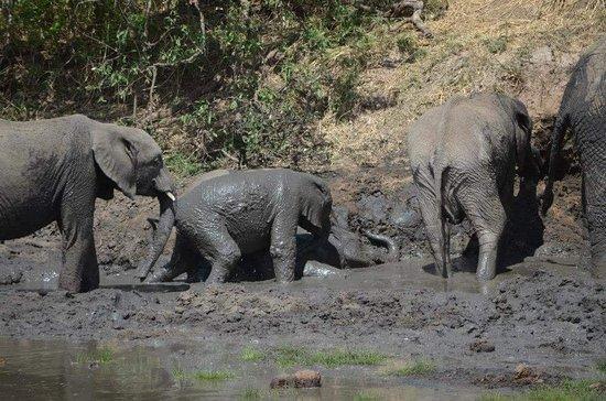 Tarangire National Park, Tanzania: FB_IMG_1528741710454_large.jpg