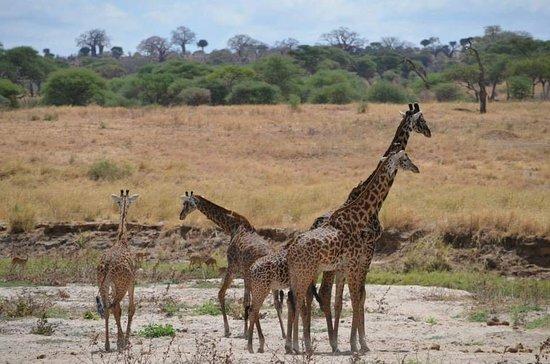 Tarangire National Park, Tanzania: FB_IMG_1528741720837_large.jpg