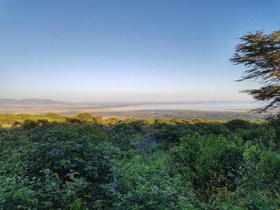 Lake Manyara National Park, Tanzania: 20180610_175356-01_large.jpg