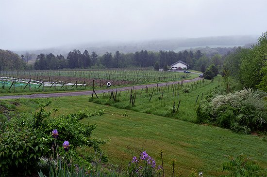‪Big Creek Vineyard and Winery‬