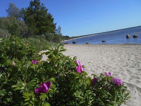 Stranden i Laulasmaa.