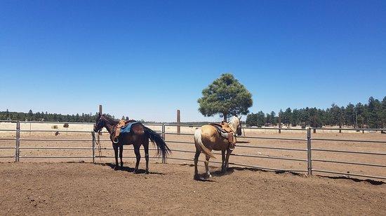 Spencers Rocken Horses Foto