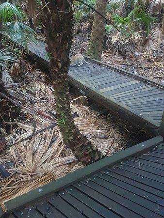 South Stradbroke Island, Australia: Bushwalk