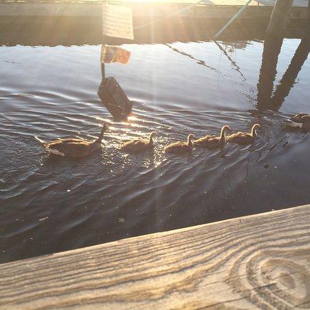 Captain Scott's Lobster Dock照片