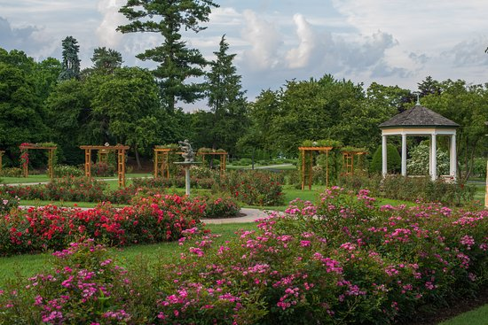 Allentown Rose Gardens