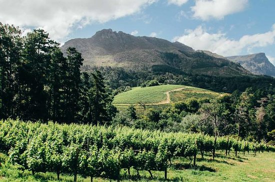 Sunday Funday: Constantia Wine Tour