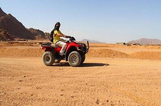 Aventure dans le désert 5x1