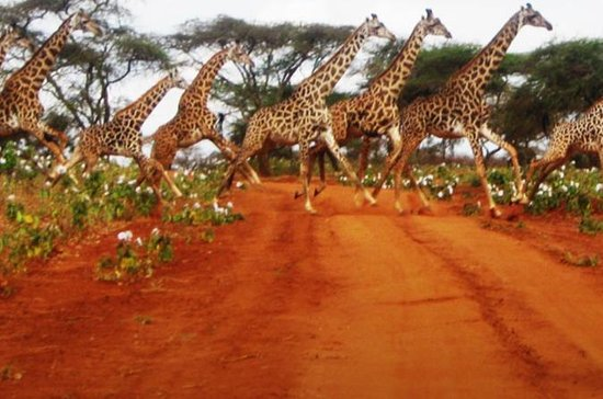 Naivasha Full Day Safari