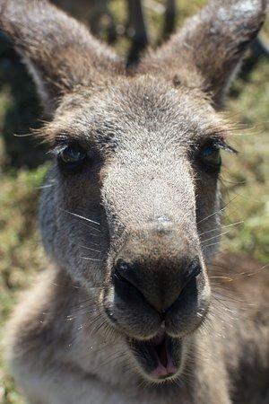 Bredl's Wild Farm: Kangaroo