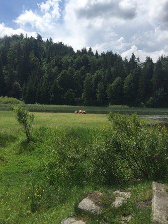 Bistrita-Nasaud County, Rumänien: photo0.jpg