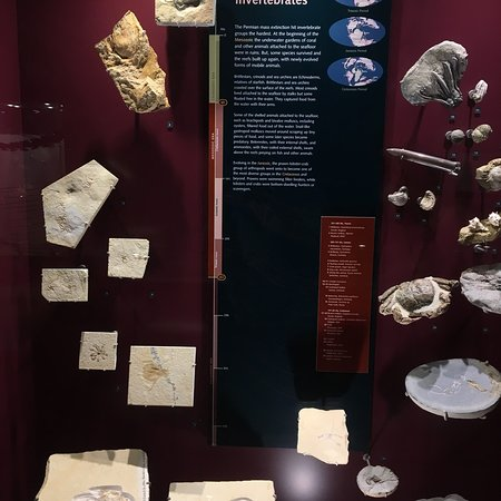 Australian Fossil and Mineral Museum: photo7.jpg