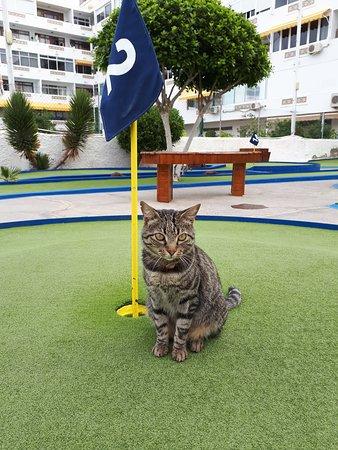 Minigolf Taidia : Mini the Minigolf Cat from Taidia
