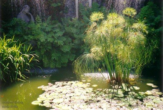 Isola Bella: небольшой пруд и циперус