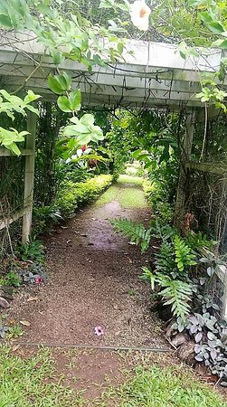 Maire Nui Botanical Gardens: Beautiful for a stroll