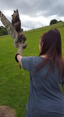 Machynlleth, UK: dinner time for one of the owls