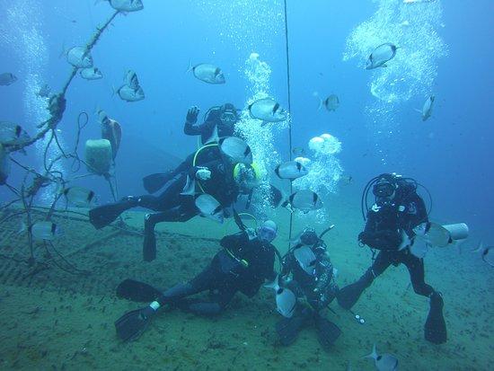 TD Diving