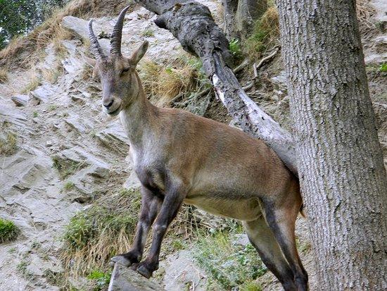Parc Animalier d'Introd照片