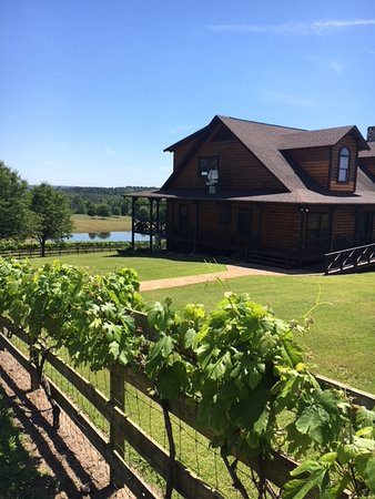 Enoch\'s Stomp Vineyard & Winery (Harleton) - 2018 All You Need to ...