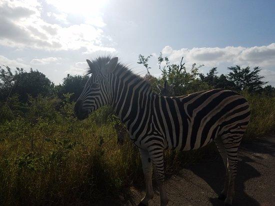 iSimangaliso Wetland Park, South Africa: 20180608_141051_large.jpg