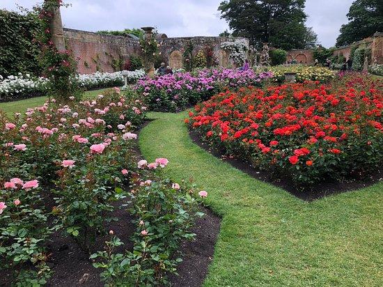 Hever Castle Gardens Rose Garden