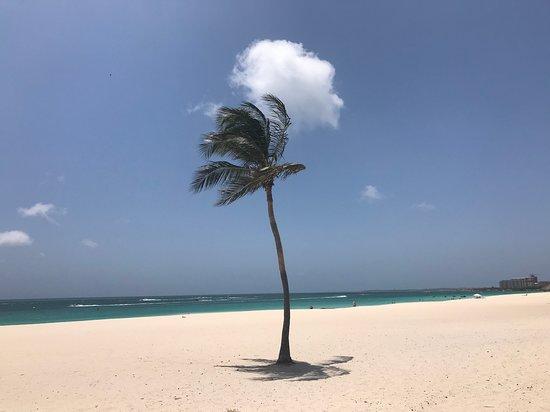 Playa Eagle Beach palmera desierta