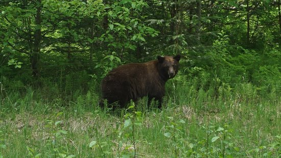 3-Hour Scooter Tour of Skagway, Alaska: Bear just off the side of the roadway. Third time in Alaska but first time I have ever seen a be