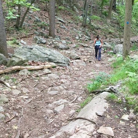 Cortlandt Manor, Estado de Nueva York: Trail is clearly marked, and a mix of dirt and rocks.