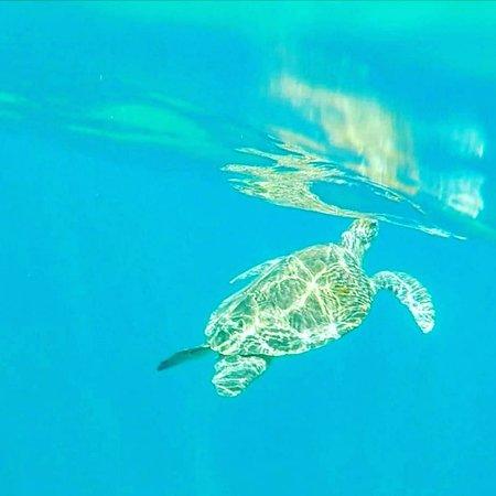 Bilde fra Tenerife snorkelling and kayaking
