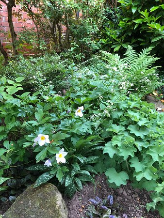 Dutton, UK: Shady plants in our garden from Bluebell Cottage Garden