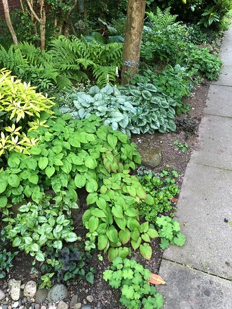 Dutton, UK: More plants from Bluebell Cottage in our shady garden