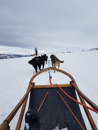 Svalbard Husky Photo