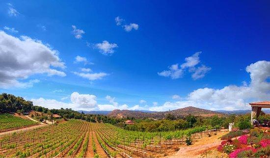 Altipiano Vineyard and Winery