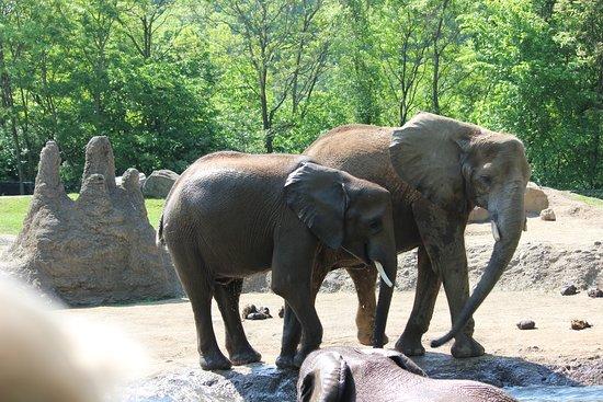 Pittsburgh Zoo & PPG Aquarium: Older elephants watching babies play