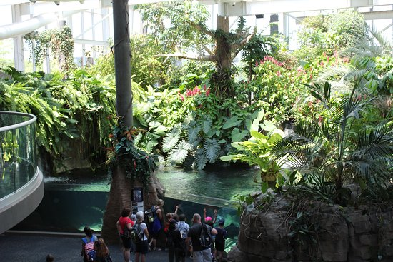 Pittsburgh Zoo & PPG Aquarium: Indoor rainforest