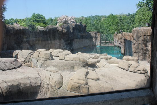 Pittsburgh Zoo & PPG Aquarium: Back of polar bear pool